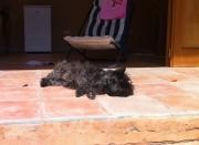 Hunden på solsemester