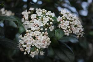 Det enda som blommar i trädgården ännu - någon som vet vad det är?