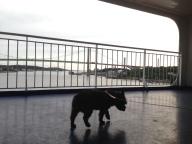 På promenad med utsikt mot Älvsborgsbron
