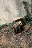Oktober 2012 - det stora akaciaträdet är borta