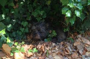 På gamla löv under murgrönan invid muren var det någorlunda svalt