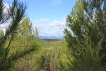 Utsikt över vinfälten mot Causses et Veyran