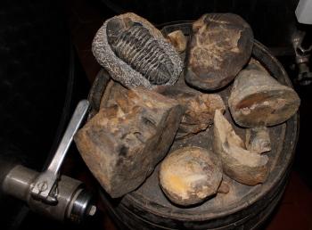 En samling fosiler pryder en vinkagge vid det obligatoriska tappstället. Mycket sådant i de här trakterna!