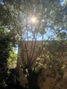 sol genom lagerträdet