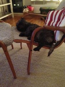 Tänker inte ligga bredvid svikarmatten i soffan ikväll