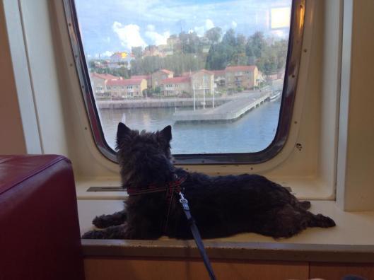 Hundar har en glasad lounge på båten - måste väl vara VIP, eller?