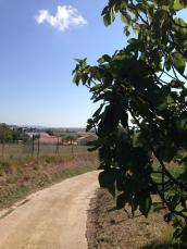 ... och genom vinfälten i riktning mot St Genies