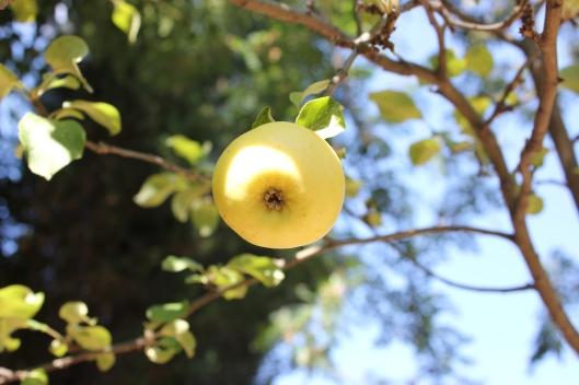 Trotsigt och stolt på just den gren som lyckats fånga solen