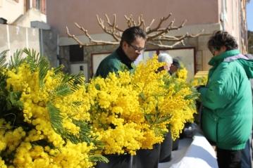 Mimosafestival i Roquebrun 2015