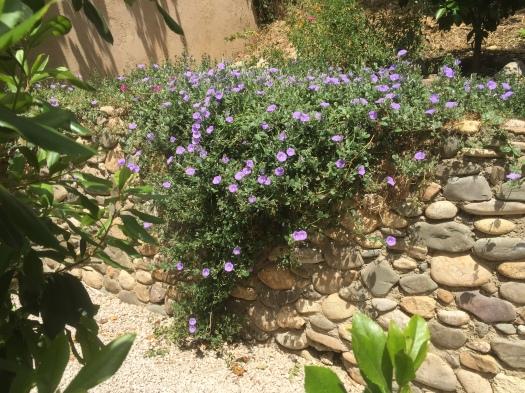 Att upptäcka hur växtligheten väller över stenmuren...