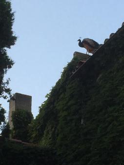 På taket ovanför oss