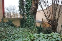 Grannen har satt upp bambustaket som murgrönan kan klättra på
