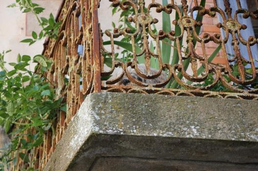 Familjens emigrerade hund håller utkik bakom de rostiga men vackra balkongräcket.